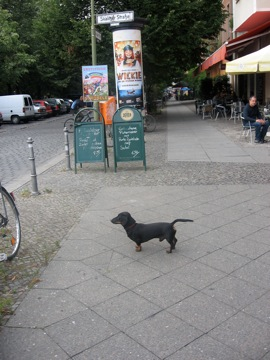 In Berlin, the smaller the dachshund, the bigger the...erm...tail!